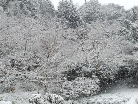 雪の朝7(2012-02-28)
