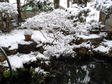 雪の朝10(2012-02-18)