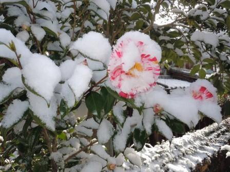 雪の朝3(2012-02-18)