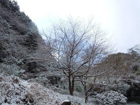 雪桜2(2012-02-18)