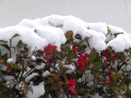 雪の午後4(2012-02-18)