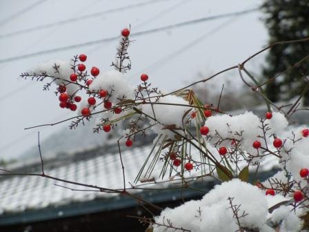 雪の午後3(2012-02-18)