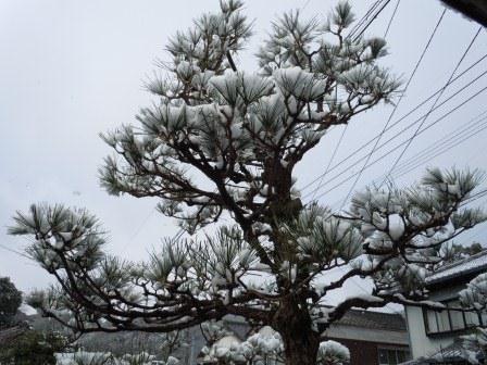 2月18日の雪(2)