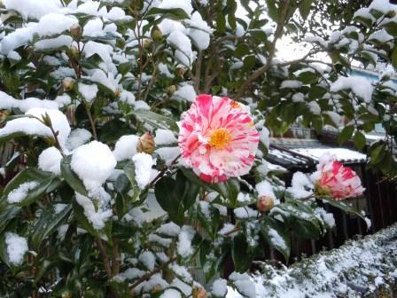 午後の雪1(2012-02-18)
