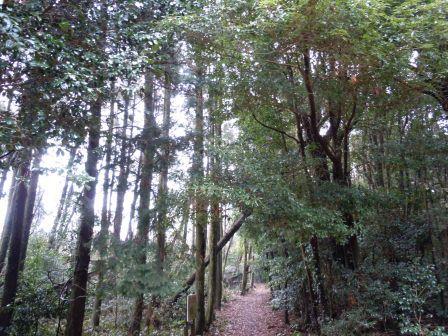オサイ観音への山道1(2012-02-23)