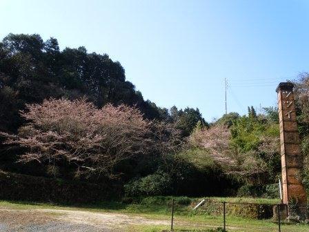 我家の桜2(2012-03-31)