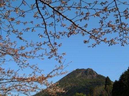 我家の桜4(2012-03-31)