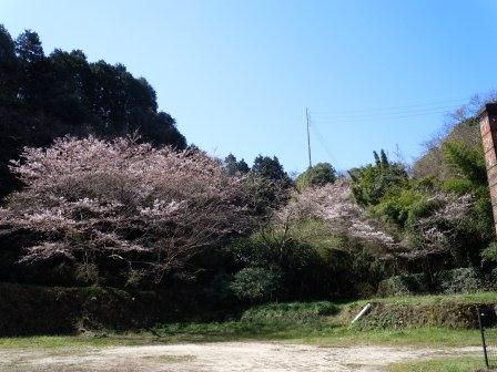我家の桜1(2012-04-01)
