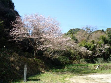 我家の桜2(2012-04-01)