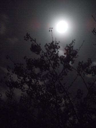 月と桜(2012-04-03)