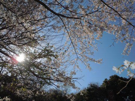 桜1(2012‐04‐07)
