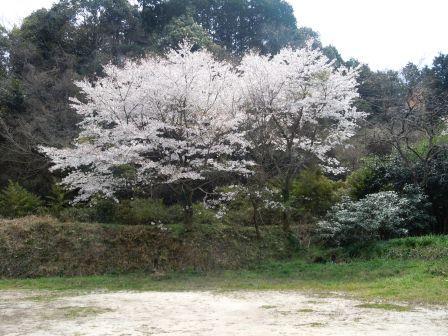 桜2(2012‐04‐10)