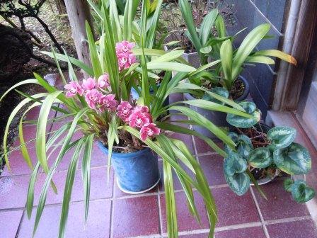 鉢植え(2012-04-20)