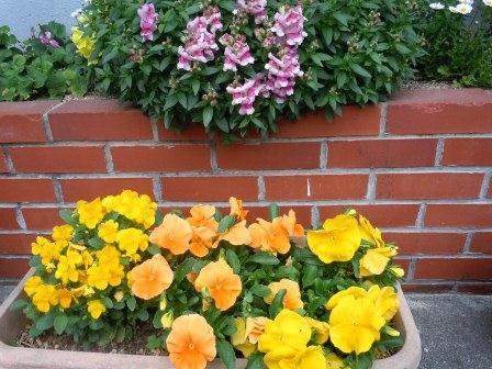 春の花3(2012-04-21)