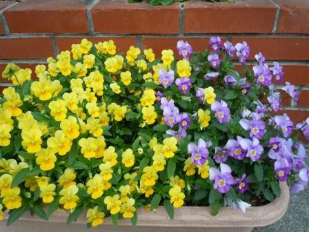 春の花2(2012-04-21)