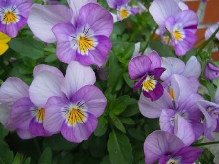 春の花5(2012-04-21)