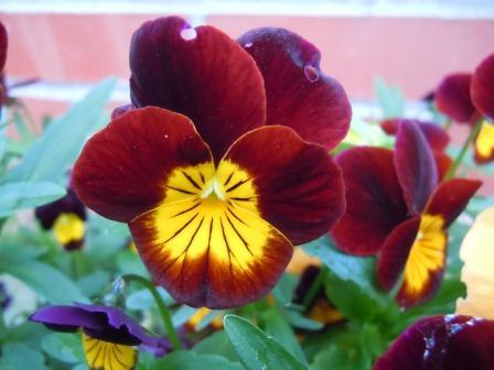 春の花7(2012-04-21)