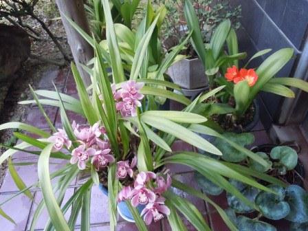 玄関の花(2012-05-13)