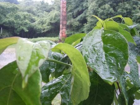 雨の土曜日11(2012-06-16)