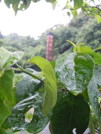 雨の土曜日10(2012-06-16)