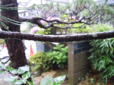 雨の土曜日3(2012-06-16)