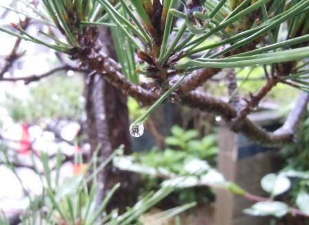 雨の土曜日1(2012-06-16)