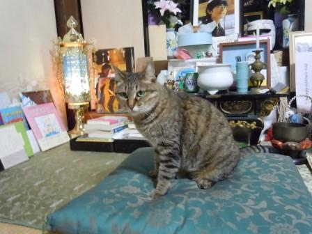 のんちゃんの居場所4(2012-07-01)