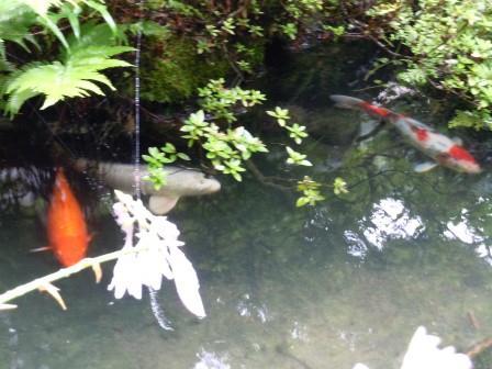 池3(2012-07-01)