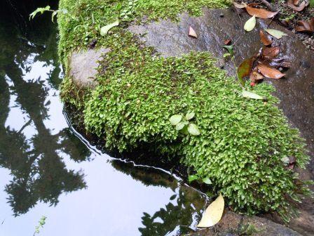 池(2012-07-01)