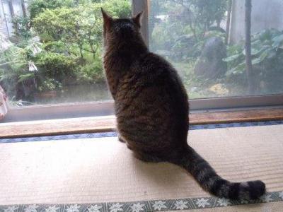 のんちゃんの居場所2(2012-07-01)