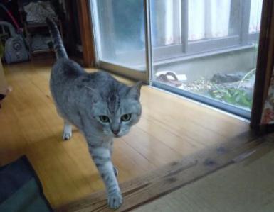 ごんちゃん5(2012-07-01)