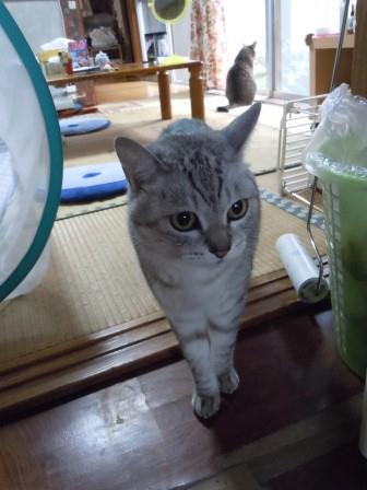 ごんちゃん8(2012-07-01)