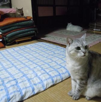 ネコさんたち(2012-07-01)