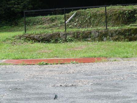 アゲハチョウ3(2012-07-22)