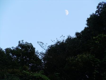 夕刻の上弦の月2(2012-09023)