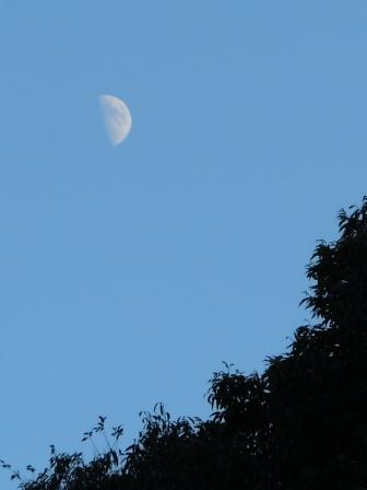 夕刻の上弦の月(2012-09-23)