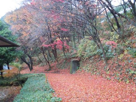 秋の終わり1(2012‐11‐29)