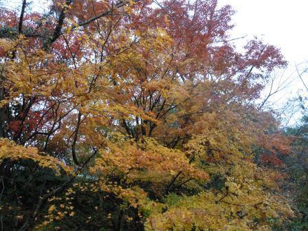 秋の終わり2(2012‐11‐29)