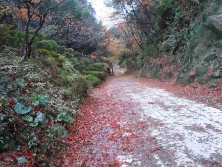 秋の終わり3(2012-11-29)
