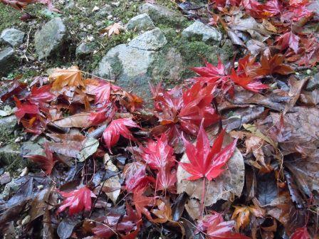 秋の終わり4(2012-11-29)