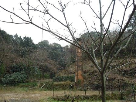 雪とハナミズキ(2012-12-23)