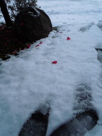 雪の足跡1(2013‐01‐18)