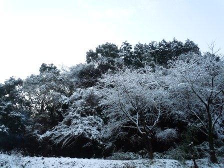 雪の華1(2013‐01‐18)