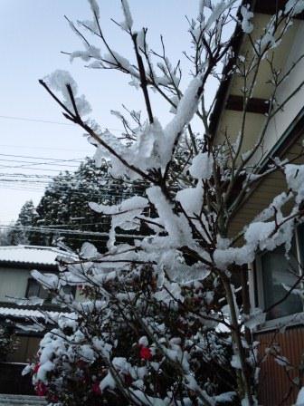 雪の華3(2013‐01‐18)