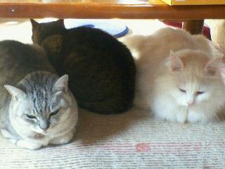 3猫さんたち2