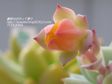 RSCN6607-s1.jpg