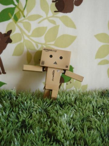 danbo amazon ver5