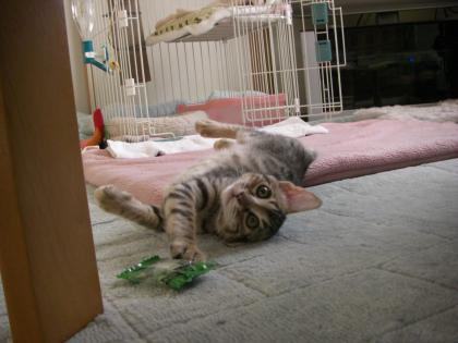 sasuke135_20101110144519.jpg