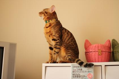 sasuke147.jpg