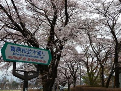 眞原桜並木通り